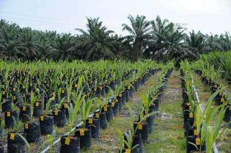 ioi plantation